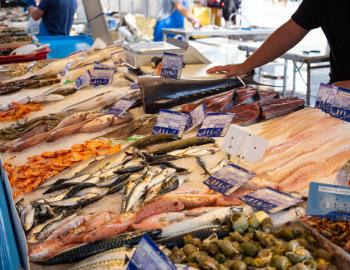 fresh seafood on display at a market